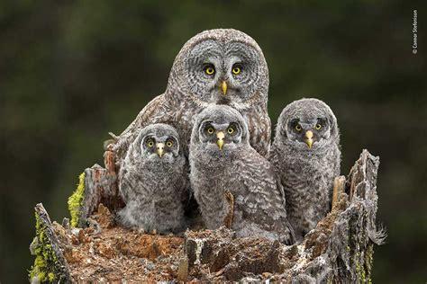 wildlife photographer   year lumix peoples choice