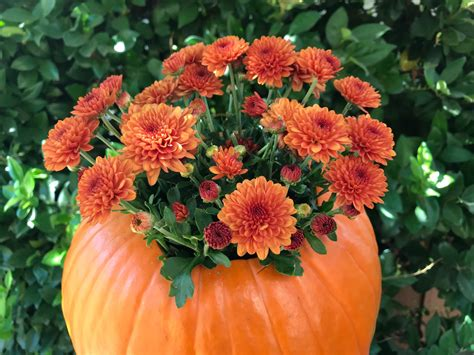 Mums in a Pumpkin - Simple Sojourns
