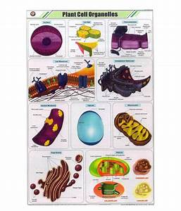 Pesa Plant Cell Organelles Chart