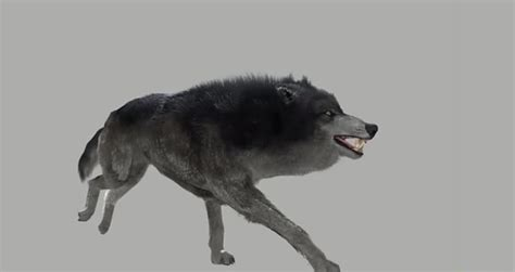 wolves   witcher   super hairy   nvidia