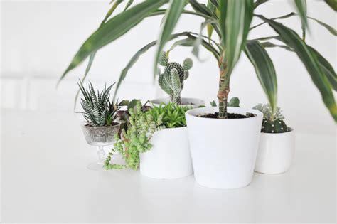 Pflanzen Für Wohnung by Die Besten Zimmerpflanzen F 252 R Die Wohnung Bonny Und Kleid