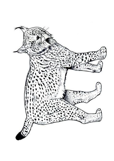 recette de cuisine ce1 coloriage lynx coloriage sur hugolescargot com