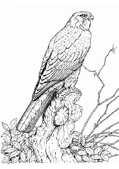 Escher Vogel Kleurplaat by Kleurplaten En Zo 187 Kleurplaten Vogels