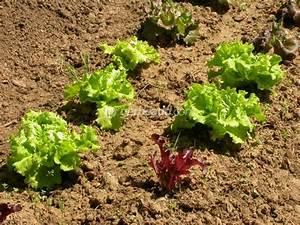 Plantes Amies Et Ennemies Au Potager : le potager en juillet ~ Melissatoandfro.com Idées de Décoration