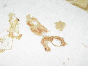 Roundworms In Cats - A cat with roundworms will often vo...