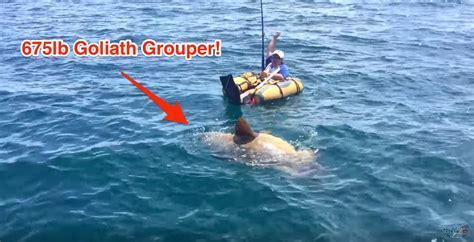 grouper goliath record ever inner tube