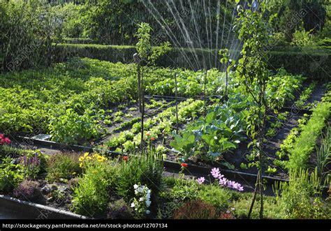 Garten Pflanzen August Gemüse beregnen sprengen kraeuter obst pflanzen bioanbau stock