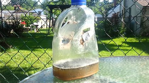 home  fly trap  plastic bottle youtube
