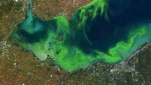Algae Crisis Pt. I: From Farm To Lakeshore   Great Lakes Now