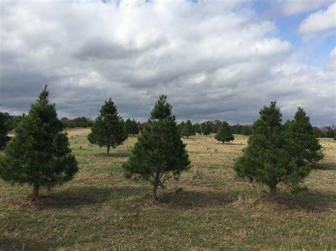 cut your own christmas tree at elgin christmas tree farm