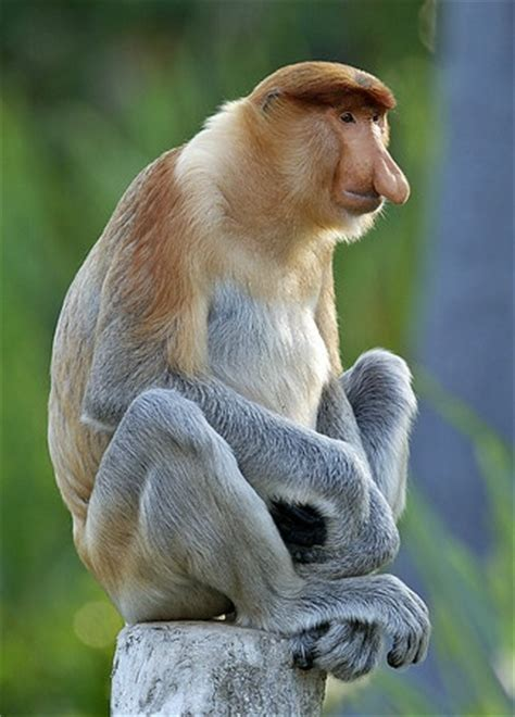 images  large ears  noses  pinterest