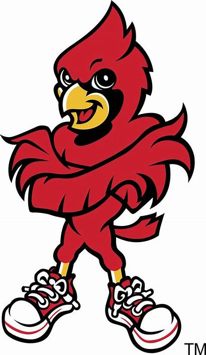 Louisville Cardinals Logos Mascot Clipart Cardinal Football