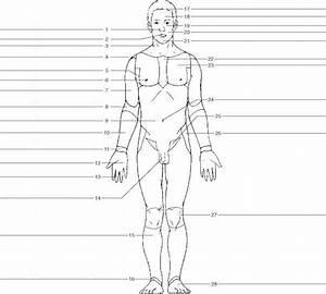 Body Regions Diagram Unlabeled
