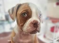 gastroenterite alimentazione corretta ambulatorio croce veterinario a roma per cani gatti e