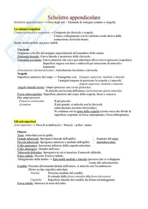 anatomia  fisiologia scheletro appendicolare