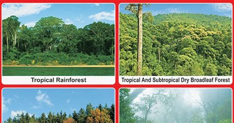 Spectrum Educational Charts: Chart 443 Types of Forest 3