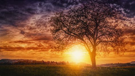 1152x864 Sunset Nature Trees 1152x864 Resolution Hd 4k
