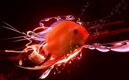 Fish Gold Wallpapers Awesome