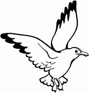 Seagull Coloring Page Metello