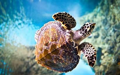 Turtle Turtles Fanpop