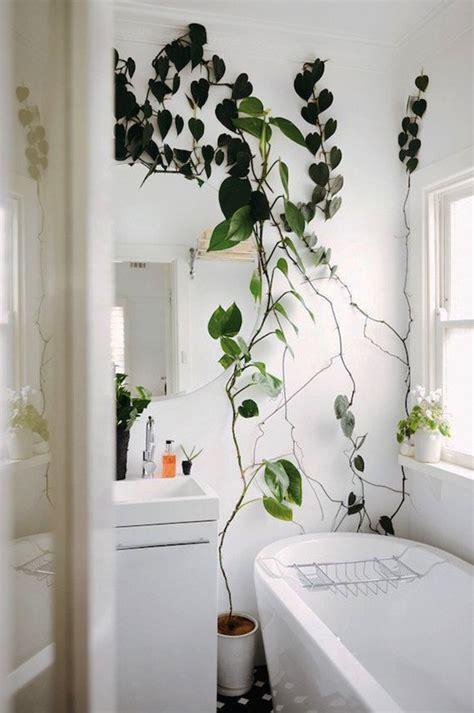 bring climbing vines indoor    home    green jungle
