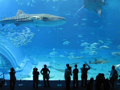 World's Largest Fish Tank