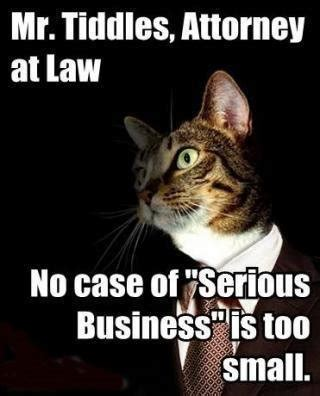 Lawyer Cat Meme - mr tiddles attorney at law cat macros