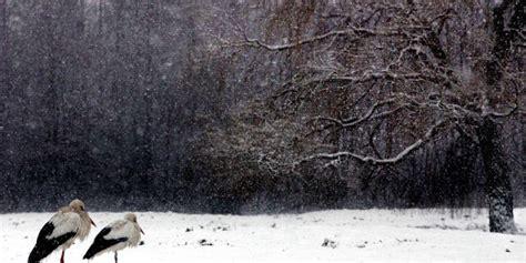 sneeuw nederland busyxfzuxosm als de temperatuur onder het vriespunt daalt dus beneden de