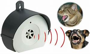 Repulsif Pour Chat Exterieur : repulsif chat exterieur voici les meilleurs produits ~ Dailycaller-alerts.com Idées de Décoration