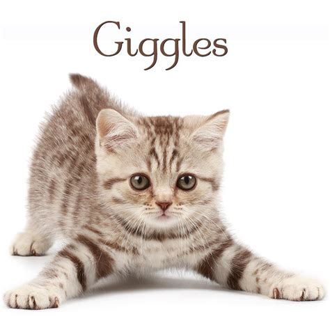 kitten names 20 cutest kitten names slideshow