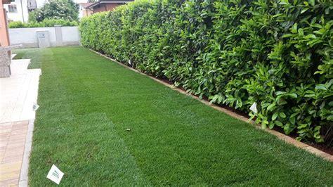 semina tappeto erboso posa tappeto erboso in rotoli dimensione giardino