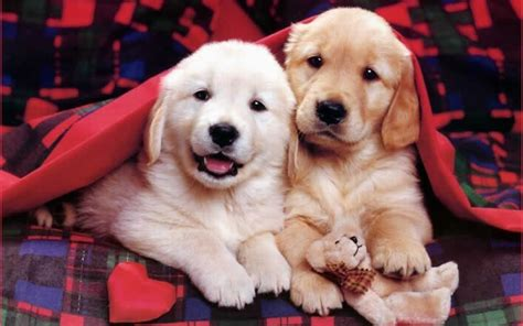 Dogs And Puppies Funny Puppies Puppies World Puppy