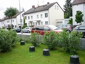 Pflanzen Für Den Vorgarten : sichtschutz f r den vorgarten welche pflanzen eignen ~ Michelbontemps.com Haus und Dekorationen