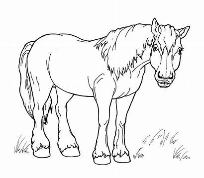 Horse Coloring Walk Pages Horses