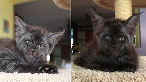 This Adorable Cat Has A Human-Like Face And It's Freaking ...