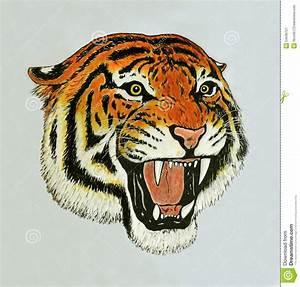 Tiger roar drawing stock illustration. Illustration of ...