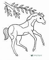 Coloring Horse Prancing sketch template