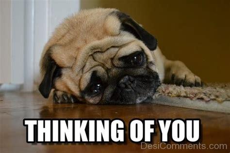 Thinking Of You Meme - thinking of you dog desicomments com