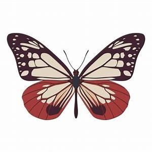 Parantica, Sita, Butterfly, Vector