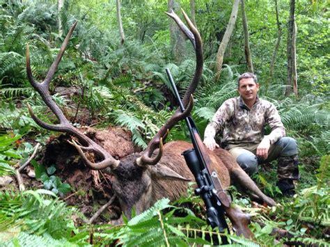 chasse du cerf au brame 2014