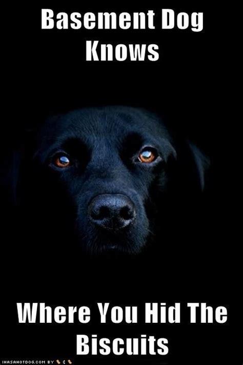 Basement Dog  Muhahahaha!!!!!!!!!!!! Pinterest