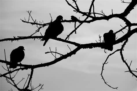gambar burung  ranting pohon