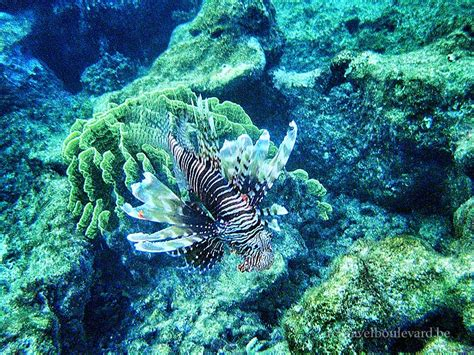 snorkeling  red sea shooting fishes   budget