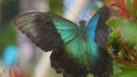 menikmati libur akhir pekan  taman kupu kupu balitopia