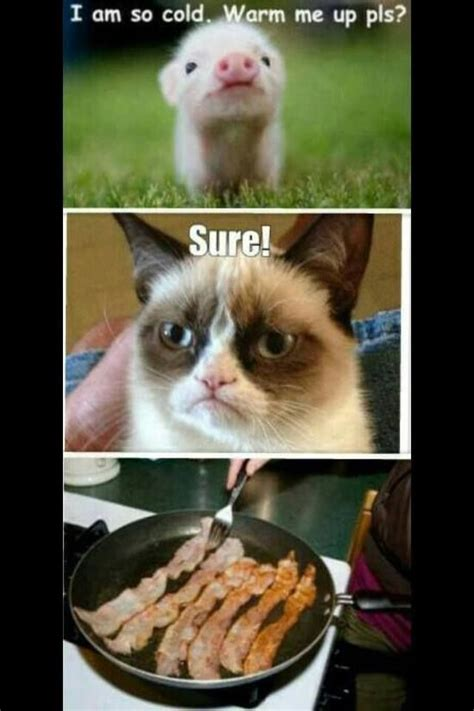 Best Angry Cat Meme - grumpy cat quotes grouchy quotes grumpy cat jokes grumpy cat humor grumpy cat pictures for