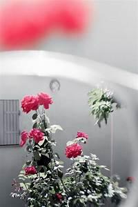 花世界月季花图片壁纸-非凡图库