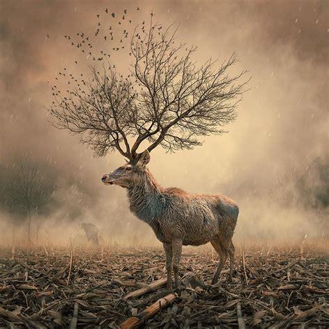 caras ionut photography china bambi