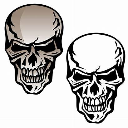 Skull Vector Human Illustration Drawing Line Isolated