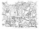 Rainforest Animals Coloring Pages Jungle Printable Tropical Animal Sheets Colouring Habitat Habitats sketch template