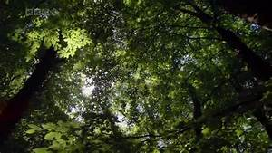 Planet Earth 10of11 Seasonal Forests - YouTube